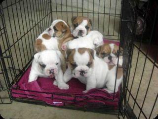 Bac Pro conseil vente en animalerie